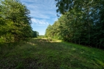 Secluded food plot area centrally located on the farm