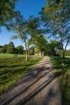 Beautiful tree lined gravel driveway