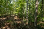 60 acres of mixed hardwoods and pines