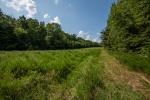 11 acre field/food plot area centrally located on the property
