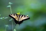 A nature photographer's paradise
