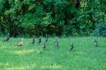Abundance of Wildlife