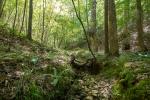 Seven Ridges at Uwharrie
