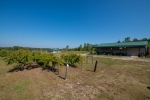 Large yard surrounding the lodge and barn includes scuppernong vines and pear trees