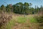 Irrigated food plot areas