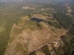 145+/- acres of Longleaf Pine Plantation