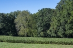Open land is lined and dotted with mature hardwoods