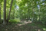 Roughly 90 acres of hardwoods