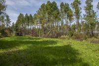 Asheboro Hunting & Timber Tract