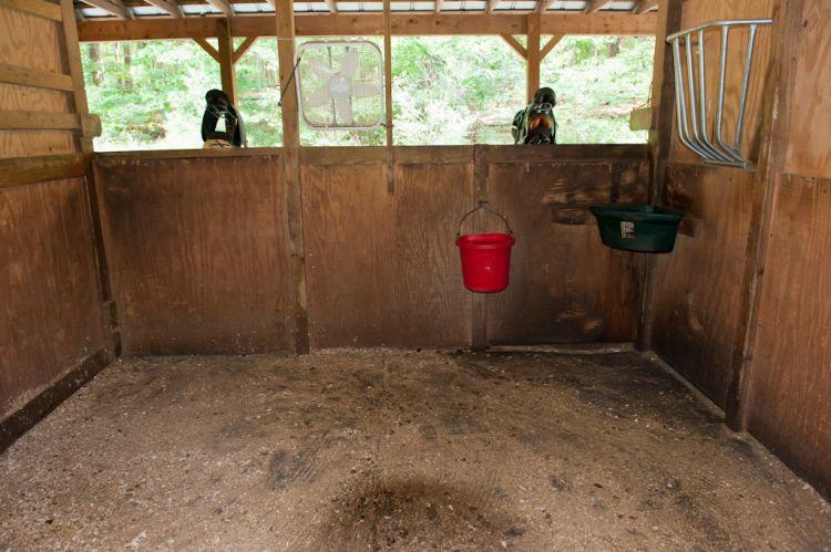 Dragonfly farm for 12x12 room square feet